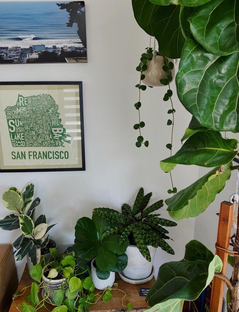 houseplants alive